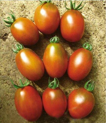 VARIETIES vegetable Seeds Heirloom Celery Fennel Cabbage onion carrot 001-060