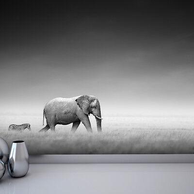 Elephant black and white photo wallpaper mural bedroom design wm147