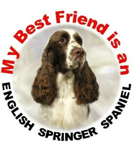 2-English-Springer-Spaniel-MBF-Car-Stickers-Starprint