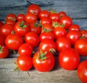 Vilma-Tomate-Dwarf-Tomato-5-Samen-Saatgut-Seeds-Balkontomate-Zwerg