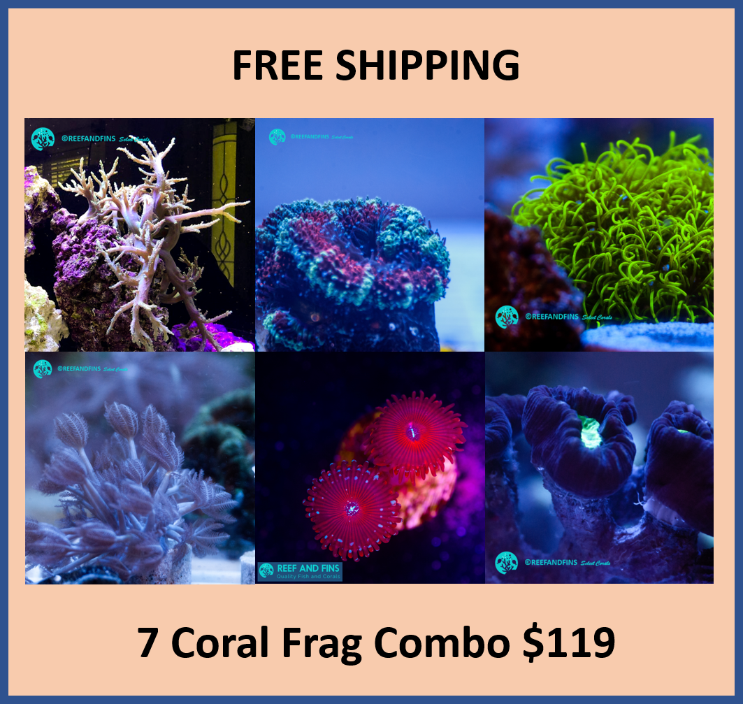 Mixed LPS//SPS//ZOA 15 Frag Pack Live Coral Free Overnight Shipping