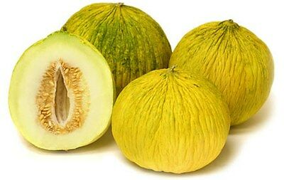"""Rare Casaba Melon """"GOLDEN BEAUTY"""" SWEET! COMB. S/H! SEE MY STORE FOR RARE SEEDS!"""
