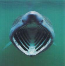 Lentikular quadrati - 3d-carta: scagliati con bocca aperta-Basking shark