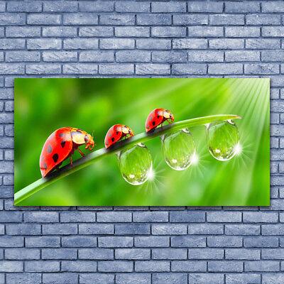 Leinwand-Bilder Wandbild Leinwandbild 140x70 Gras Marienkäfer Tautropfen