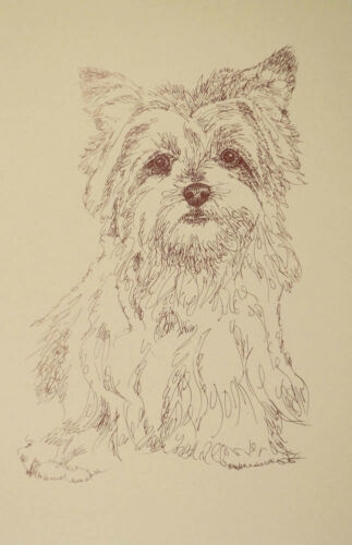 Yorkshire Terrier Dog Art Kline Signed Lithograph #36 Drawn from just words