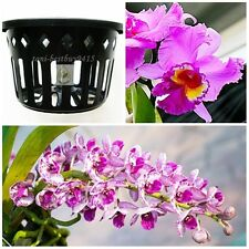 "5 Free 1 Vanda Orchid Mesh Net Pot Basket Cup 6"" Round Phalaenopsis Paphiopedil"