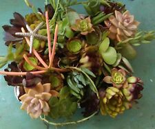 Succulent plants. 45 ready to plant assorted cuttings On sale this week $26.95!