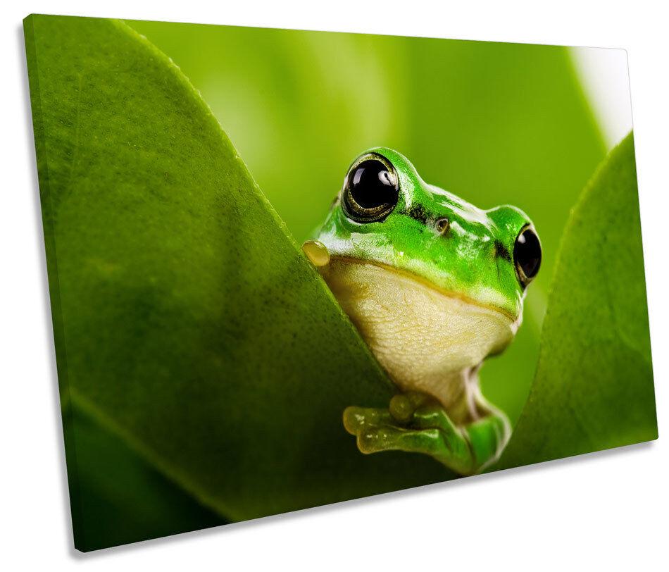 verde Frog Frog Frog Wildlife TELA SINGOLA WALL ART PICTURE PRINT 9684d9