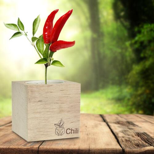 Ecocube Planze Chili selbst anpflanzen Chilipflanze Chili im Holzwürfel