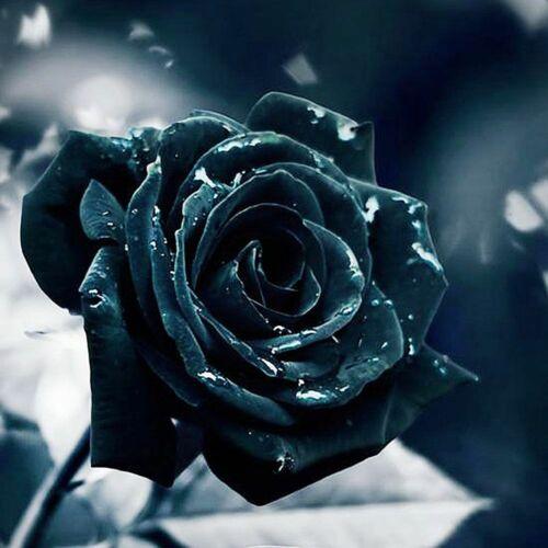 Black Rose Diamond Painting Round Square Drills Design Embroidery House Displays