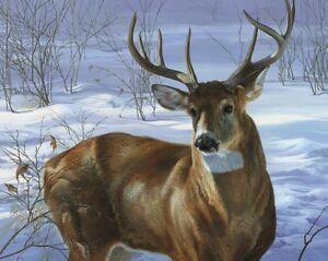 Whitetail Deer Joni Johnson-Godsy Buck Art Print Poster 11x14 Through My Window