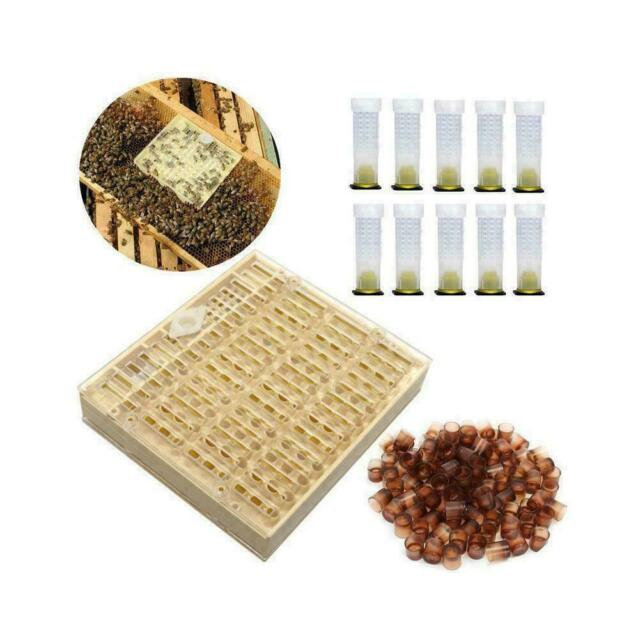 200Pcs New Brown Beekeepers Bee Queen Royal Beekeeping Raise Rearing Cell Cup