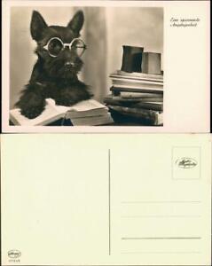 Ansichtskarte-Tiere-Hunde-Hund-Buch-lesend-Brille-Fotokunst-1930