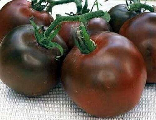 Heirloom From Siberia Black Prince Tomato 15 Seeds