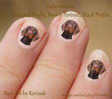 Dobermann, marrón Retrato, 24 Perro Nail Art pegatinas Doberman Pinscher calcomanías
