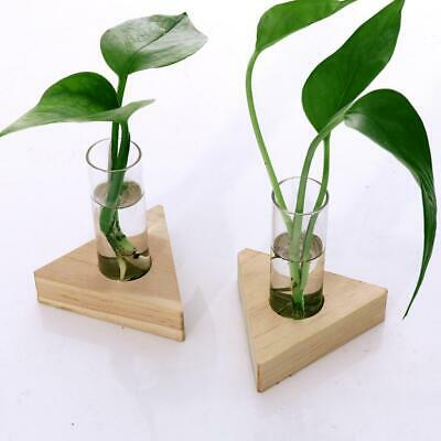 Glass Test Tube Vase in Wooden Frame Flower Pots for Hydroponic Plants