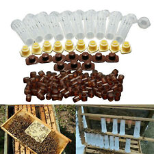 100 Cell Cups Queen Rearing System Bee Beekeeping Cultivating Box Feeding Tool