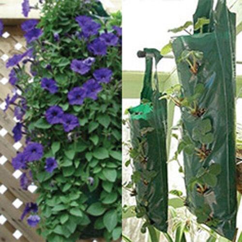 Hanging Petunia FLEUR /& Carnation Fleur Suspendus 12 Sacs
