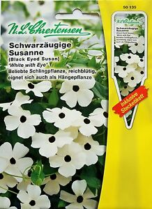 schwarz ugige susanne 39 white with eye 39 thunbergia alata. Black Bedroom Furniture Sets. Home Design Ideas