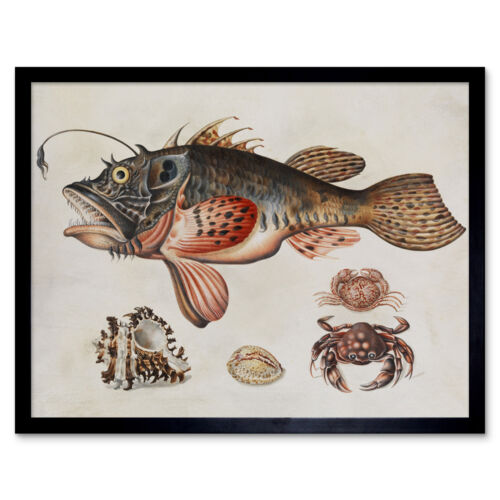 Merian Deep Sea Peces Cangrejos caracoles Naturaleza Pintura Pared Arte Impresión Enmarcado 12x16