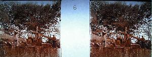 Photographie-c1920-Chemin-de-croix-des-Espelugue-femme-essuie-le-visage-de-Jesus
