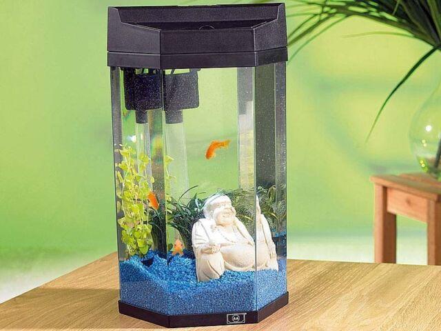 Säulen Aquarium 7l Nano, Jungfische, Garnelen komplett