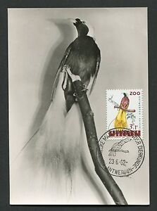 Belgique Mk 1962 Zoo Oiseaux Birds Oiseau De Paradis Carte Maximum Card Mc Cm D3869-afficher Le Titre D'origine