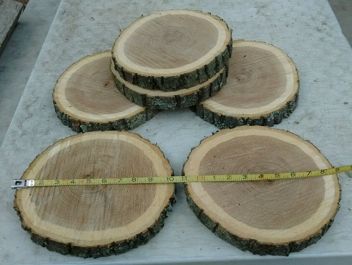 36 Pc  9 in  Oak Log  Round Slices Wood Disk Rustic Wedding Centerpiece Coaster