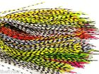 GRIZZLY BARRED RUBBER LEGS ... Pack or Set -- Fly Tying