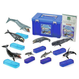 Marine-Mammals-DX-Whale-Dolphin-8pcs-Real-Figure-Box-Colorata-Japan