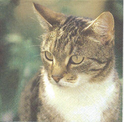 2 Serviettes en papier Portrait de chat  Decoupage Paper Napkins Cat