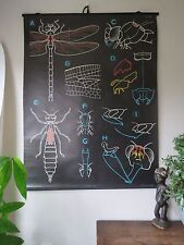 VINTAGE DR AUZOUX P SOUGY PULL DOWN SCHOOL WALL CHALK CHART OF DRAGONFLY ZOOLOGY