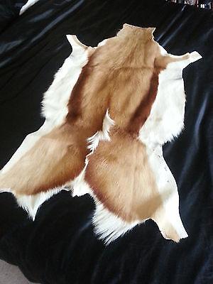 SPRINGBOK NEW GRADE XL (approx +/-90cm) deer hide fur rug skin pelt