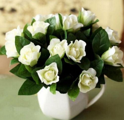 FD999 GARDENIA //CAPE JASMINE Jasminiodes White Shrub Aromatic Flower Seed 10pc: