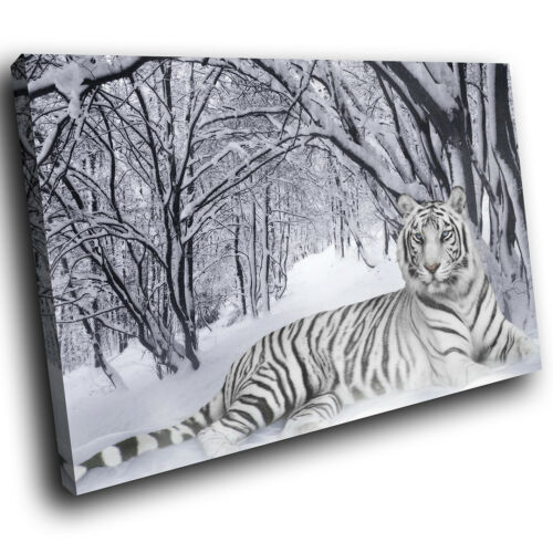 A047 Snow White Tiger Winter Funky Animal Canvas Wall Art Large Picture Prints