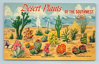 Desert Plants Of The Southwest Labelled Plants Vintage Postcard Ebay