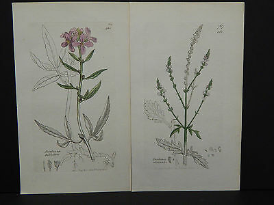 Botanicals, J. Sowerby, Copper c.1800 Plate engraving, Original Hand color g#030