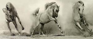 Chevaux arabes art mural toile trip-tic Poster Imprimé Animal de ...