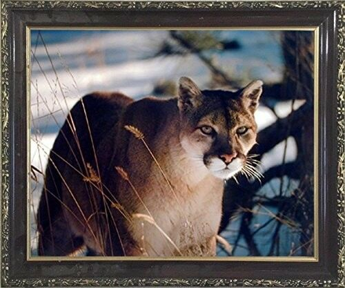 Wild Cougar in Snow Wildlife Mountain Lion Animal Wall Art Decor Framed Picture