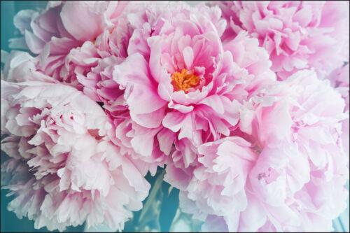 Fabuleuse Toison Papier Peint XXL belle florissante des Pivoines Fleurs 10712
