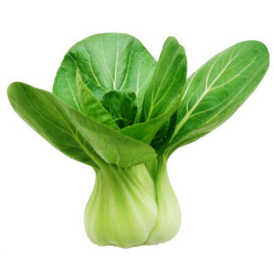 1000pcs Shang Hai green Chinese Cabbage High yield  easy to sow Green Food