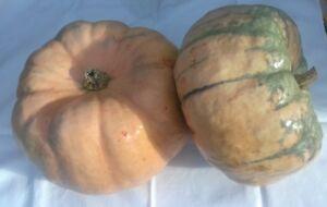 Heirloom Waltham Butternut Squash 10 feinste Samen-frühestens zum Reifen ne Y3M2