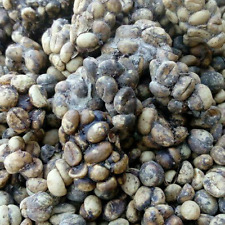 Java Wild Luwak Robusta Coffe Original 250 grams