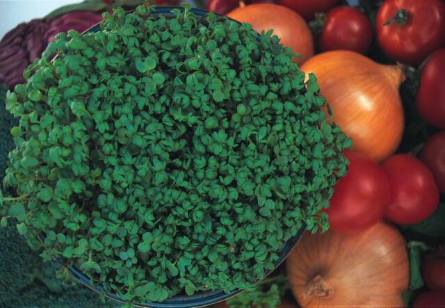 Cress Fine Curled 20,000 seeds - Vegetable