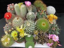 50 Cactus Mix Seeds Fresh Exotic Cacti Rare Cactus Mix Indoor Pot Plant Seeds