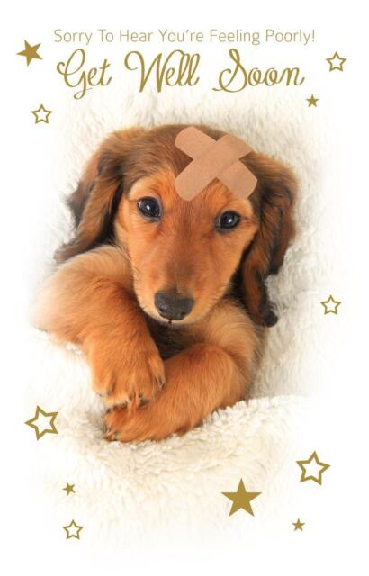 Cute puppy sorry to hear youre feeling poorly get well soon greeting cute puppy sorry to hear youre feeling poorly get well soon greeting card m4hsunfo