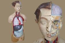 Vecchio Anatomia Modello didattico per interno Organi rimovibile Medicina Torso