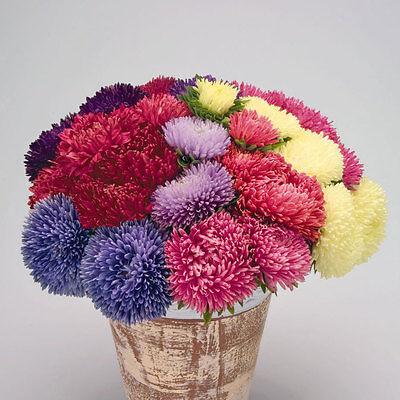 200 seeds Wildflower Aster Powder Puff  mix flowers Callistephus chinensis star