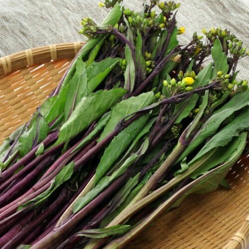 CHOY SUM PURPLE 100 Seeds HON TSAI TAI vegetable garden ASIAN HEIRLOOM stir fry