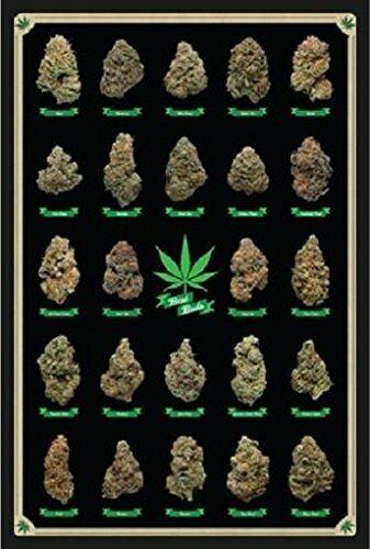 FRAMED Best Buds Educational Cannabis Marijuana Strains 36x24 Art Pint Poster